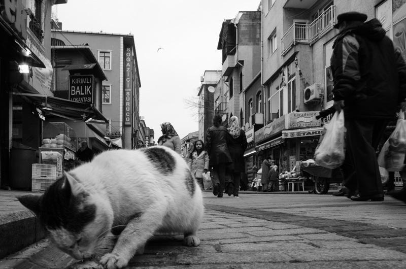 Ri-Trovarsi-a-Istanbu-05